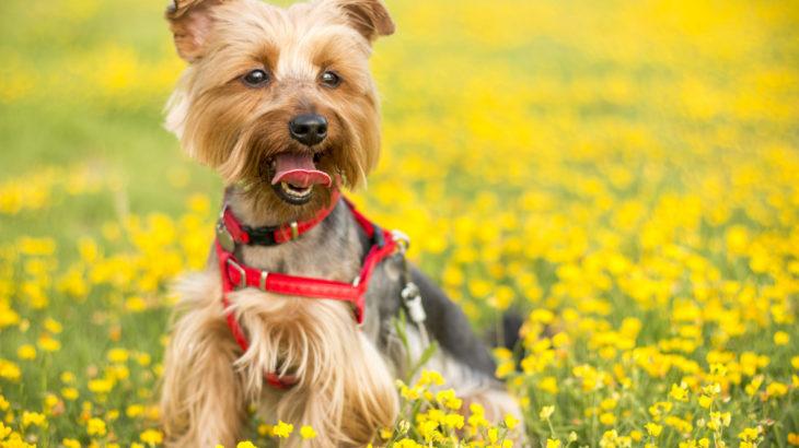 השפעת תזונה על התנהגות כלבים