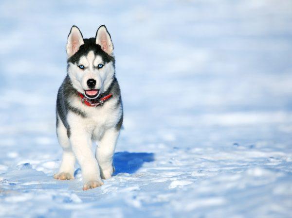 מזונות רעילים לכלבים