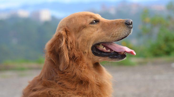 שינוי תזונתי לכלבים